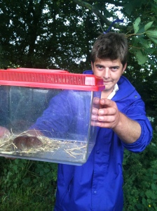 Fin from OMSCO with a bank vole at Beechenhill Farm